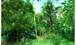 Greenish kauthukapark