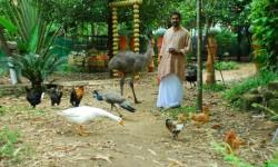 Master feeding birds