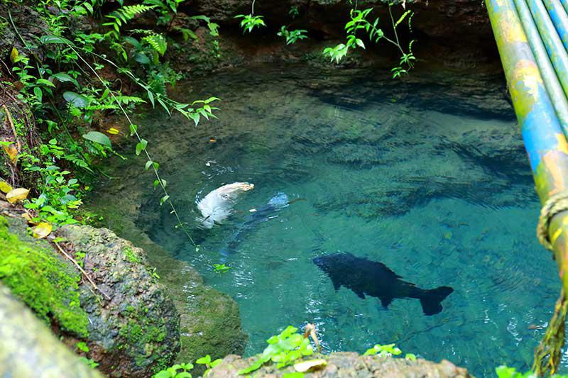 Aquarium Fishes In Kerala Aqua Culture Of Thrissur